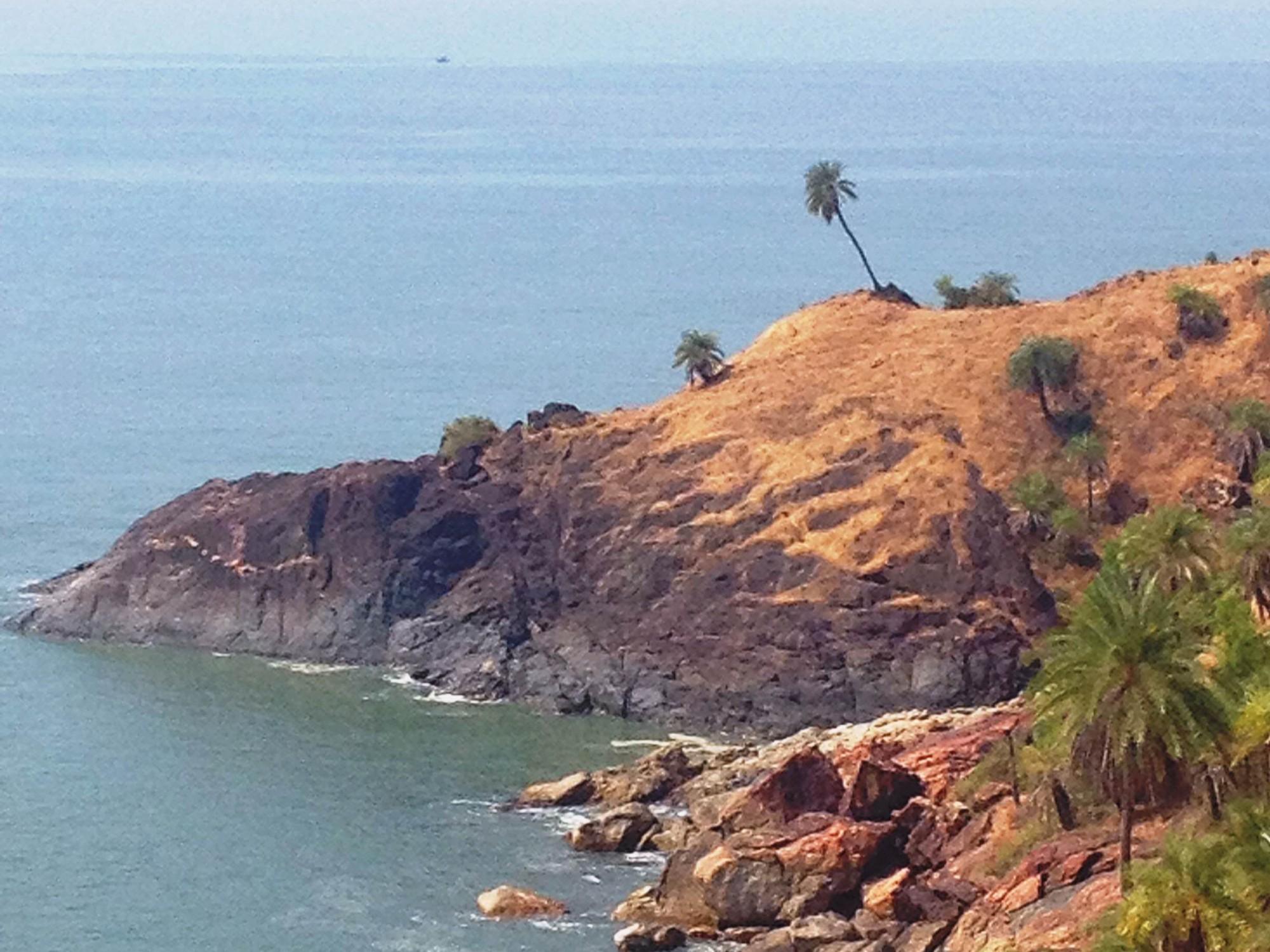 palm tree om beach gokarna karnataka india travel nature hike