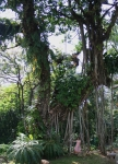 trees nature travel kuala lumpur park malaysia