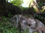 monkeys gua charas caves malaysia