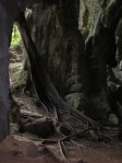 tree gua charas caves malaysia
