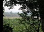 palm plantation view gua charas malasia
