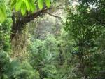 canopy walk rainforest taman negara malaysia