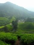 cameron highlands malaysia tea
