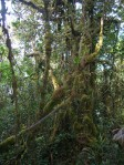 cameron highlands malaysia mossy forest