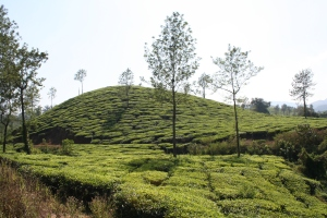 wayanad kerala india nature travel