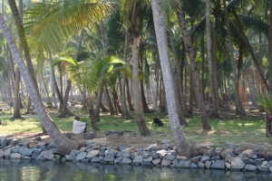 backwaters kerala india