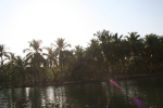 travel palm trees backwaters kerala india