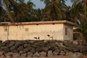 goats bekal kerala india travel