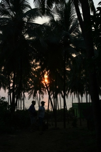 shadows jungle bekal beach kerala india travel