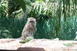 monkey kuala lumpur malaysia
