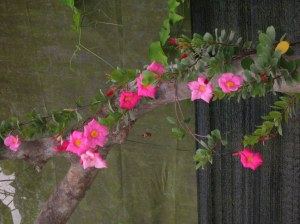 flower cameron highlands malaysia