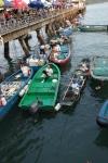 hong kong harbour fish