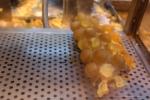 hong kong waffle treat
