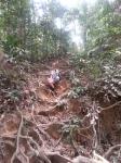 roots forest jungle taman negara malaysia