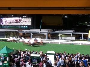 hong kong hore races