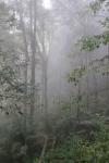 kinabalu park sabah borneo malaysia nature travel