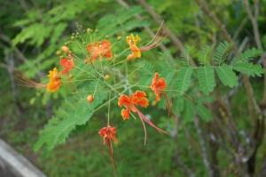 flower malaysia