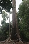 nature travel Sabah Borneo Malaysia