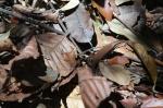lizard animal wildlife malaysia jungle