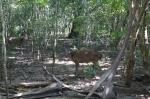 deer animals komodo park indonesia