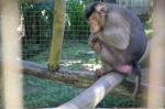 sarinbuana eco lodge bale indonesia travel monkey