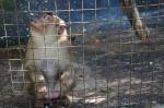 monkey sarinbuana eco lodge bale indonesia travel