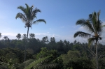 sarinbuana eco lodge bale indonesia travel palm trees