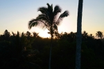 sarinbuana eco lodge bale indonesia travel palm tree sun rise