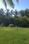 Ubud Green Bali Indonesia hotel travel rice paddy view