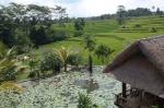 ubud bali indonesia travel rice fields