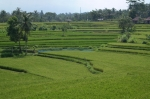 ubud bali indonesia travel rice paddies