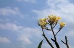 ubud bali indonesia travel flower