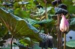 ubud bali indonesia travel saraswati water temple lily flower