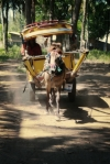 travel gili t island lombok indonesia cidomo horse drawn carriage