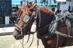 travel gili t island lombok indonesia horse