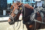 travel gili t island lombok indonesia horse