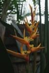 anyar estate private villa bumbak balii indonesia travel accommodation flower