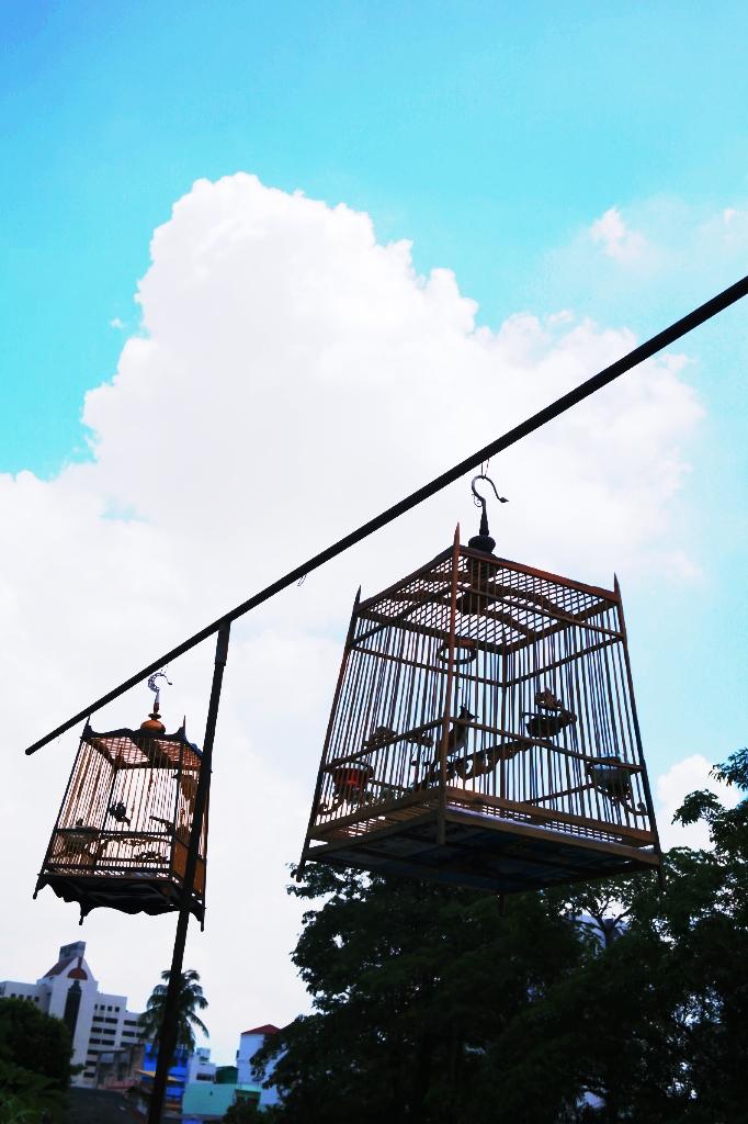 birdcage hat yai thailand travel pic