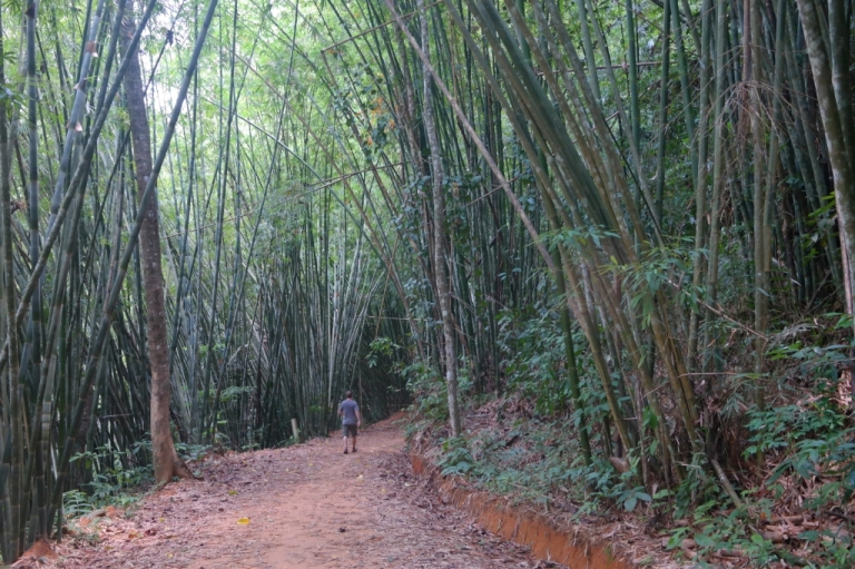 bamboo forest woods koh sok national park thailand travel