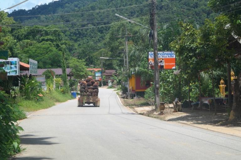 jack fruit truck koh sok thailand travel