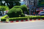 elephant bush Chiang Mai Thailand travel