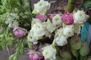 flowers cambodia
