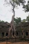tomb raider temple siem rea cambodia travel